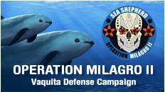 button_campaign_milagro2_01